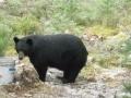 Tims bear pics 2012 069.jpg