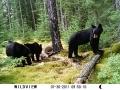 bear hunt, 2011 184.jpg